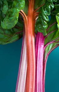 tiges-de-rhubarbe