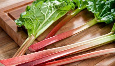 rhubarbe fraiche